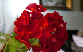 Picture macro, flowers, red, nature