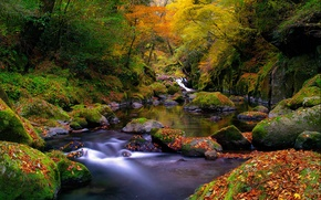 Picture autumn, forest, leaves, river, stream, stones, moss, Nature