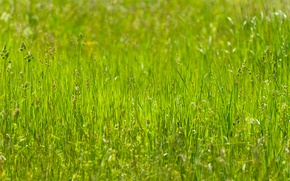 Picture greens, summer, Grass, meadow, the sun