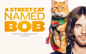 Picture eyes, cat, blue eyes, man, films, movie, face, animal, poster, funny, situation, scarf, paws, fur, …