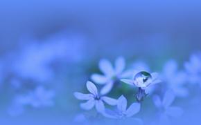 Wallpaper water, macro, flowers, plant, color, drop, petals, blue, blue