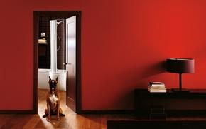 Picture interior, chair, bathroom, doggie