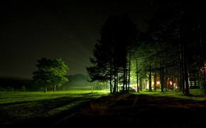 Picture light, trees, night, house