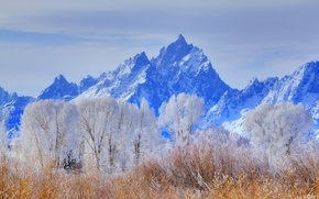 Picture winter, frost, the sky, snow, trees, mountains, USA, Wyoming, grand teton national park