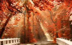 Picture ROAD, FOREST, NATURE, TOMANCE, LEAVES, COLOR, LIGHT, TREES, BRIDGE, BRANCHES, RAYS, ORANGE, AUTUMN, FOLIAGE, The …