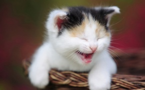 Picture basket, muzzle, kitty