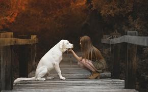 Picture girl, bridge, dog