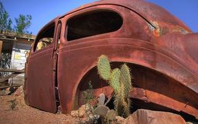 Wallpaper case, auto, cactus, rust