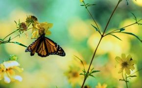 Picture macro, flowers, photo, butterfly, plants