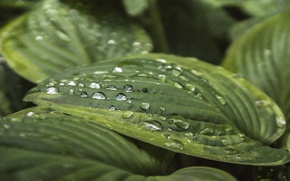 Picture water, macro, sheet