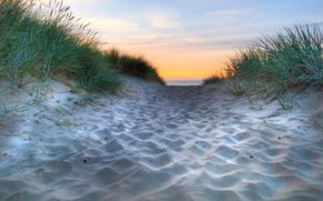 Picture sand, sea, grass, water, macro, nature, the ocean, coast, horizon, weed, beaches, travicka, Sands beach