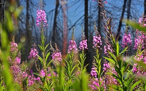 Picture forest, trees, flowers, glade, plant