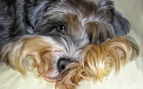 Picture dog, Photoshop, shaggy
