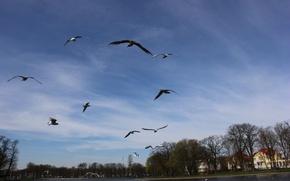 Picture seagulls, spring, Kaliningrad, lake superior