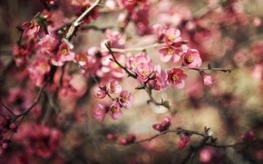 Wallpaper flowers, nature, branch, plant, blur, flowering, bokeh, bokeh