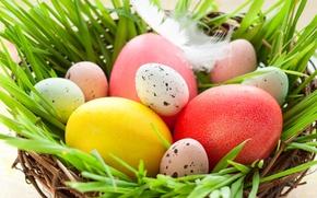 Wallpaper grass, pen, holiday, eggs, spring, Easter, socket, Easter, Easter, quail, chicken