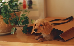 Picture plant, package, puppy