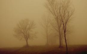 Wallpaper trees, night, fog
