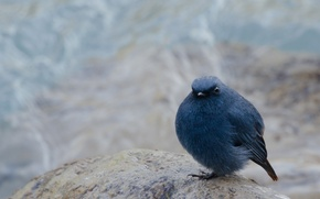 Picture background, bird, stone, blur, sitting, bun