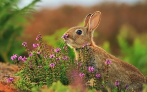 Picture grass, flowers, hare, rabbit, razmytost