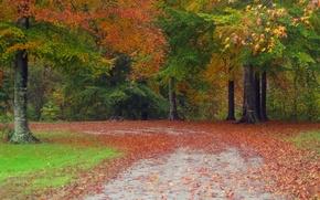 Picture autumn, forest, leaves, trees, nature, Park, track, forest, Nature, falling leaves, trees, landscape, park, autumn, …
