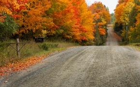 Picture road, autumn, leaves, trees, landscape, nature