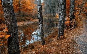 Picture autumn, leaves, nature, pond, Park, birch