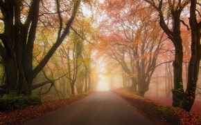 Picture road, autumn, forest, fog, Park