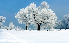 Wallpaper frost, trees, Nature, snow, winter