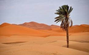 Picture sand, the dunes, Palma, desert