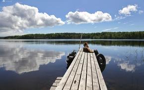 Picture Nature, dog, Lake, pier, Landscape