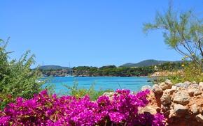 Wallpaper sea, stones, flowers, landscape