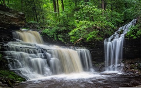Picture forest, water, stones, waterfall