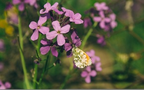 Picture summer, flowers, insects, nature, mood, lilac, butterfly, Macro, wallpaper, flower, noon