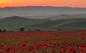 Picture field, the sky, sunset, flowers, fog, hills, Maki, Italy, Italia, Toscana, Siena, Crete Senesi