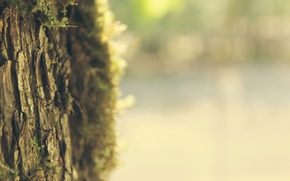 Picture focus, widescreen Wallpaper, widescreen Wallpaper, blur, tree, mood, trunk, summer, widescreen wallpapers, spring, sharpness, light, …