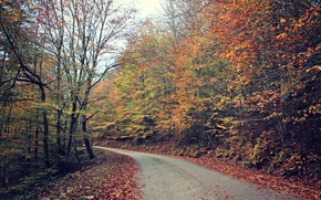 Picture road, forest, leaves, trees