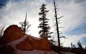 Picture snow, stone, Trees