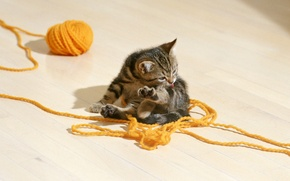 Picture kitty, striped, tangle.thread
