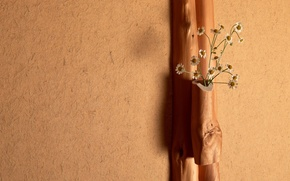 Picture light, flowers, wall, tree, chamomile, bouquet, plaster
