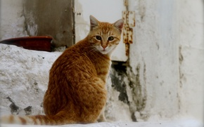 Picture cat, cat, background, red, street