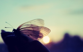 Picture the sun, nature, butterfly, Macro, sunset