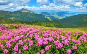 Picture the sky, grass, the sun, flowers, mountains, landscape, nature, meadows