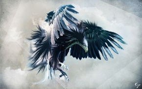 Picture look, flight, eagle