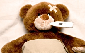 Picture toy, bear, thermometer, temperature