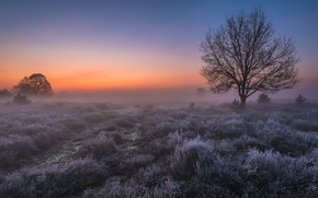 Picture frost, field, light, fog, tree, dawn, morning, Netherlands, Holland, Saint Anthony