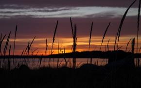 Picture summer, sunset, lake, bokeh