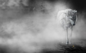 Picture flower, fog, Wolf, art, wolfroad, the fog
