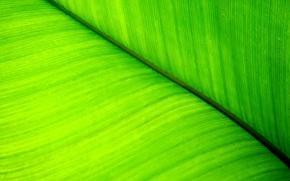 Wallpaper Plant, sheet, greens, line