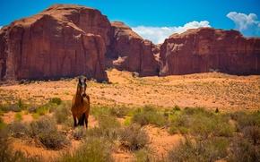Wallpaper rocks, desert, horse, Mustang, AZ, Utah, USA, Wild West, Monument valley